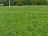 Cahermore Cross, Rosscarbery, West Cork - Site For Sale / 0.5 Acre Site / P.O.A