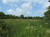 Pluckhimin Lane, Garristown, North Co. Dublin - Site For Sale / 1 Acre Site / €75,000